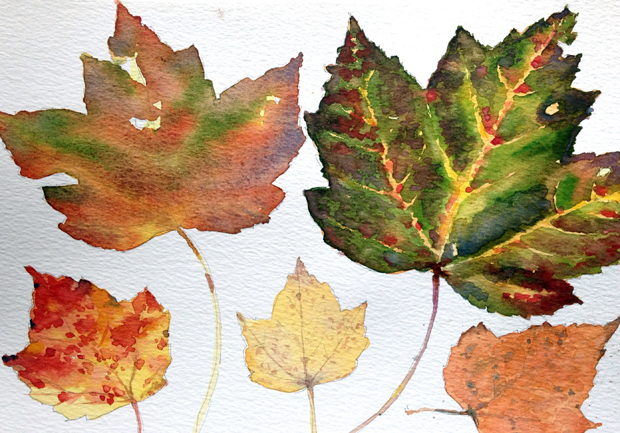 Leaves2_620w