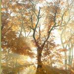 Tree_150w