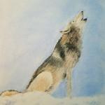 11.7.15_wolf_620w2